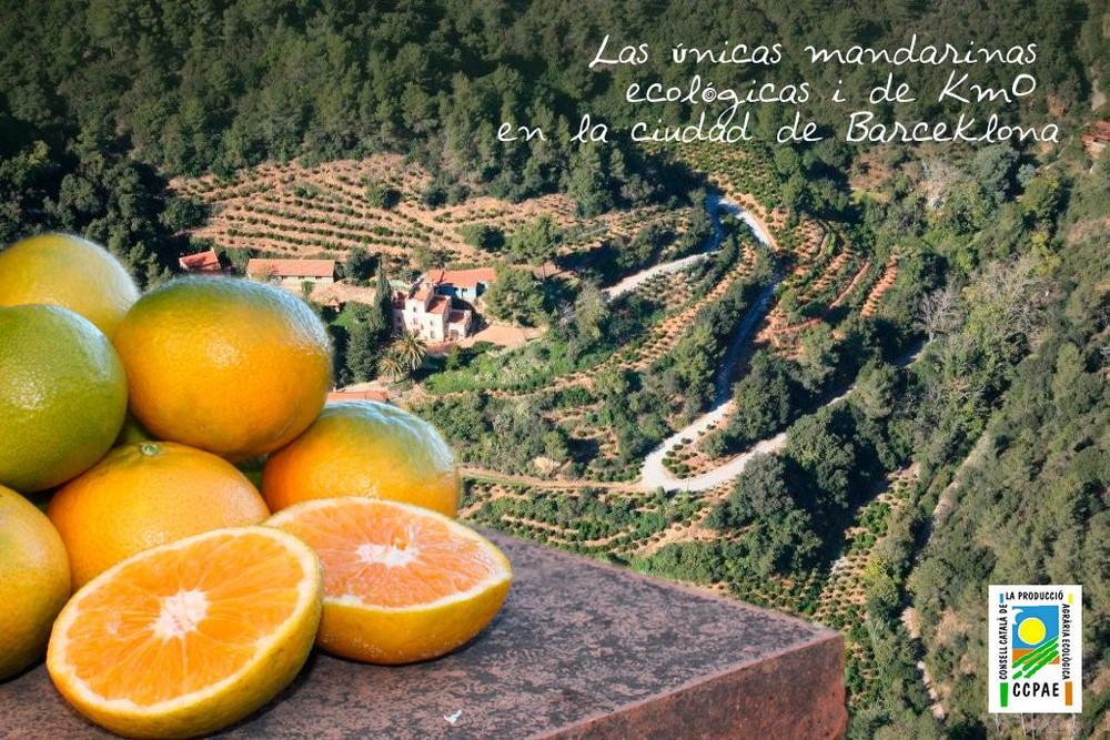mandarinas-finca-es
