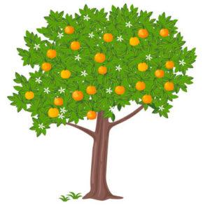 mandarino2